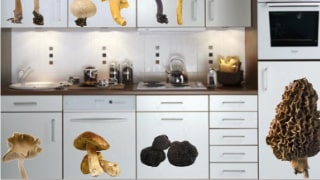 autocollants champignons